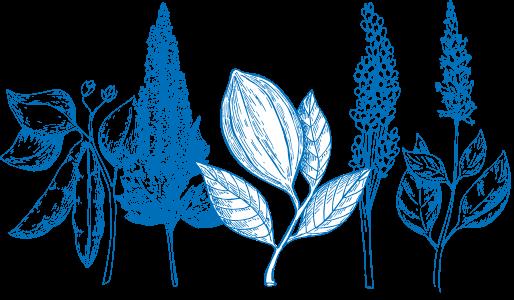 plants-transparent