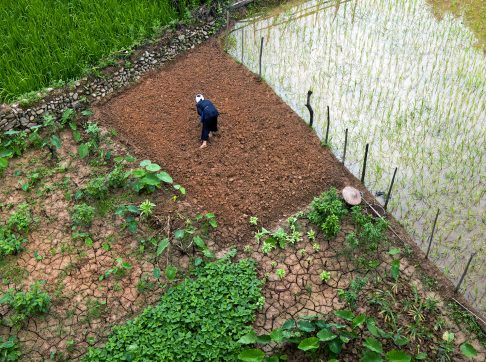 working-on-ricefields-china-asia