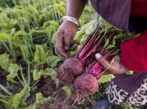 african-woman-holding-beetroot-3