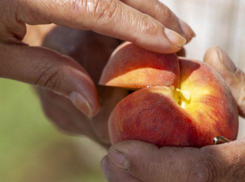 ga-peach-lb0607_5659-etx-1600