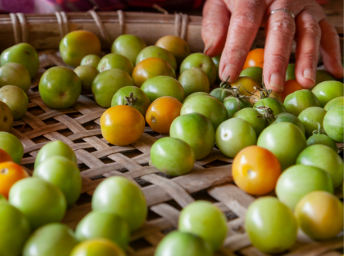 50_50_feature_480x360-green-tomatoes